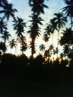 20100403.jpg